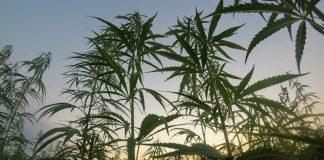 This Democratic Congressman Just Called Marijuana A 'Gateway Drug'
