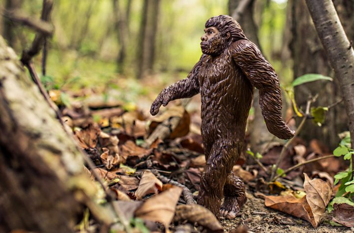 People Are Searching For Bigfoot Porn Thanks To A Certain Republican Candidate