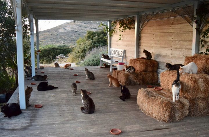 Greece cats