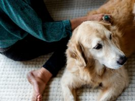 Why Have No States Legalized Marijuana Use For Pets?