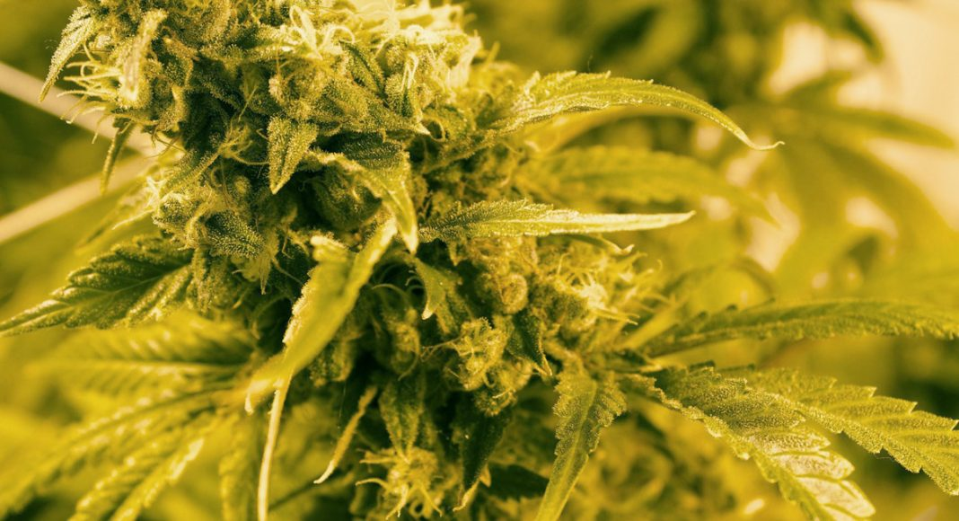 Why Inflammation Is Significant And How Cannabis Helps