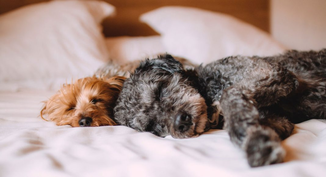 new study says that women who sleep with dogs have more restful nights