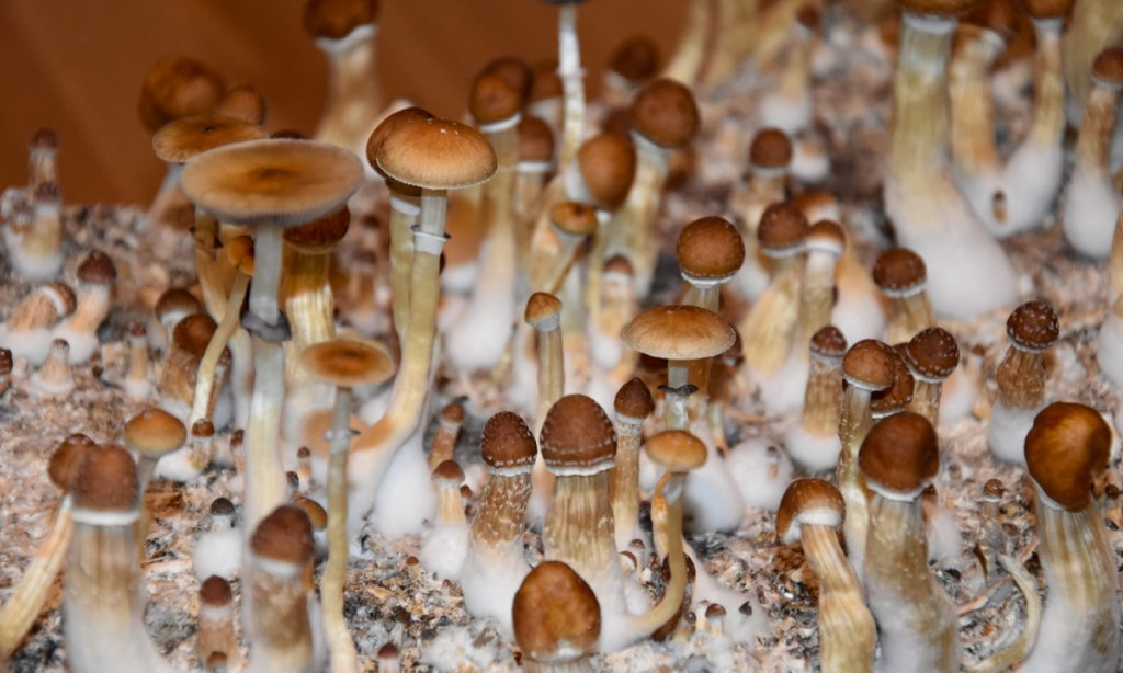This Psilocybin Patent Could Be A Really Big Deal