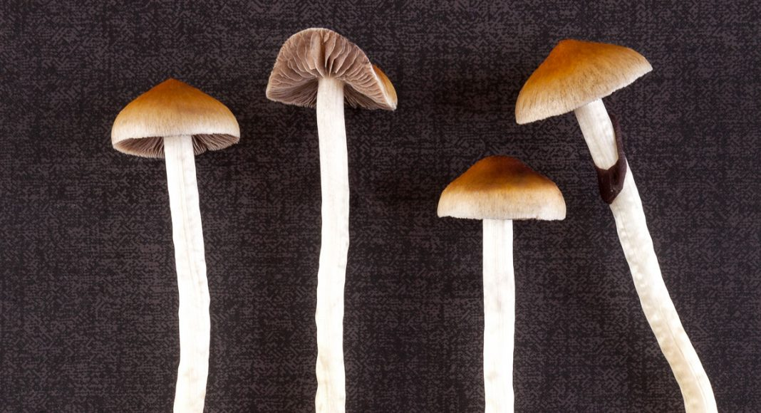 oregon is seriously considering legalizing psilocybin mushrooms