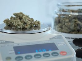 poll democrats more in favor of marijuana legalization than ever