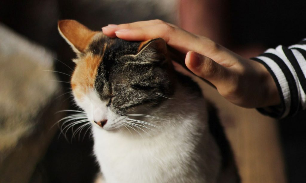 you could be passing down personality traits to your cat