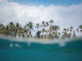 hawaii once again says no to recreational marijuana