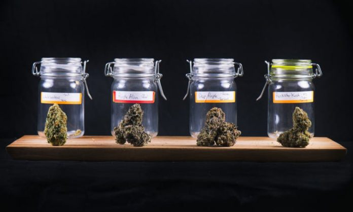 marijuana is a lot more than just thc