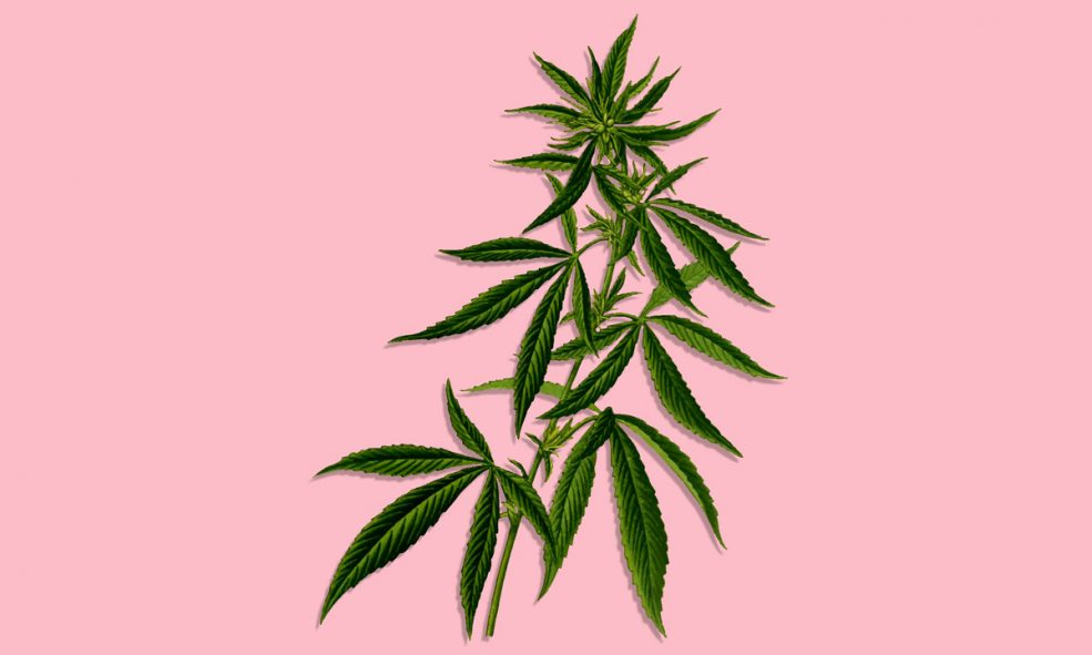 The Effects Of Smoking Low-THC, High-CBD Cannabis