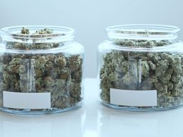 study finds the most efficient way to store marijuana over long periods of time