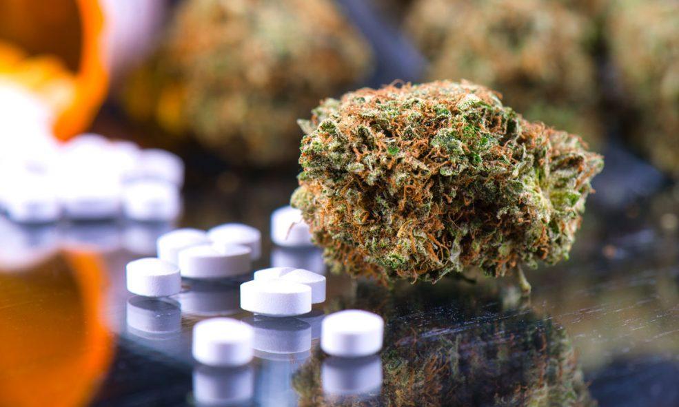 marijuana fentanyl opioids