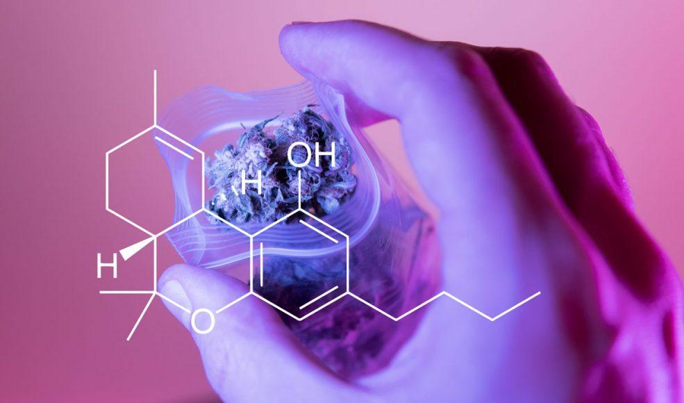 Cannabis 101: Why Isn't Marijuana's CBD Intoxicating?