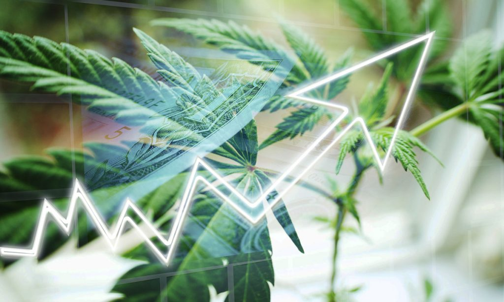 who will be the big business winners in cannabis