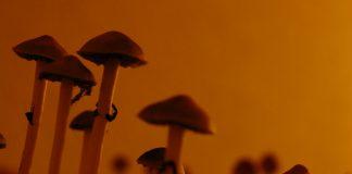 denver decriminalizes magic mushrooms