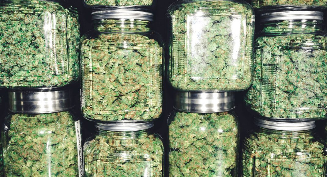 beginners guide to weed