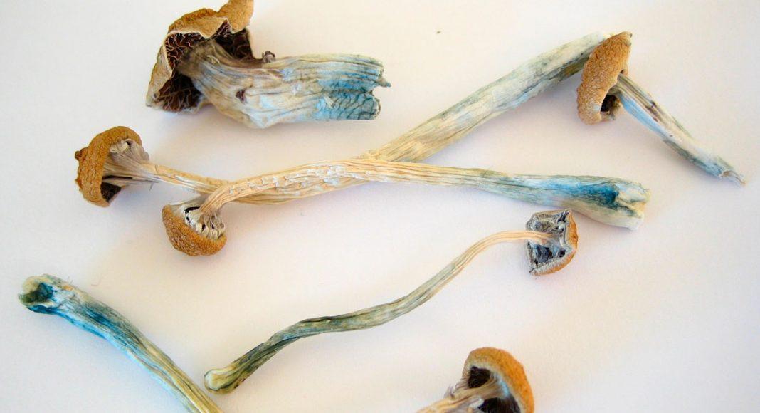 michael pollan praises psychedelics in his book condemns denvers mushroom decriminalization