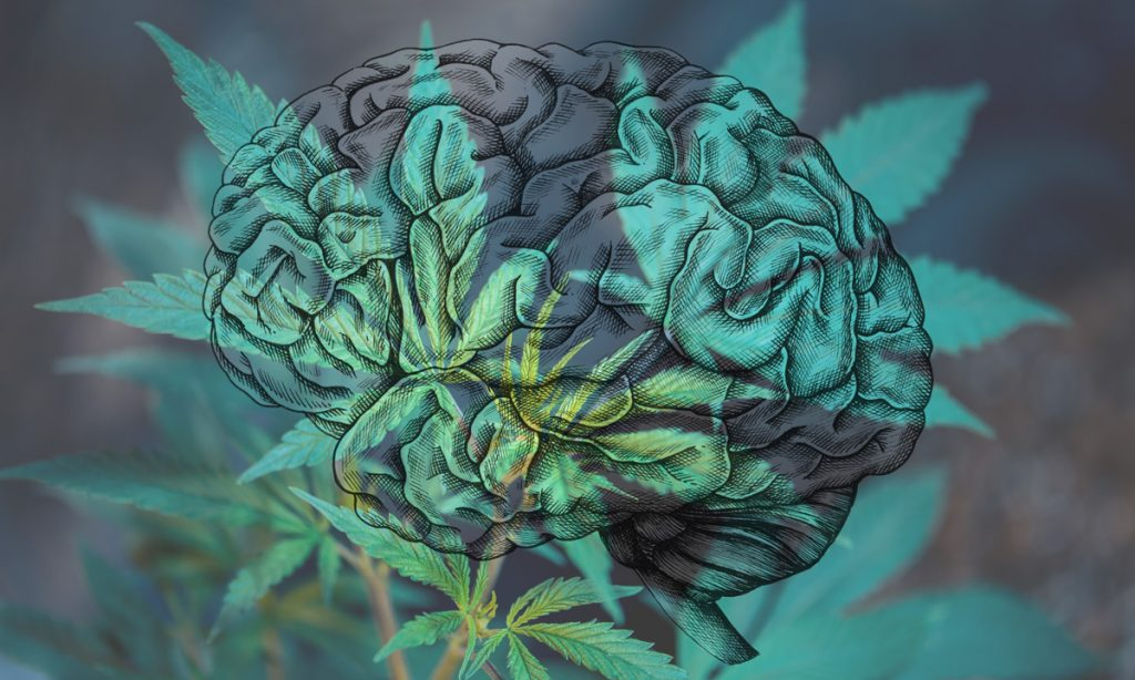 your brain on weed concussions and cannabis