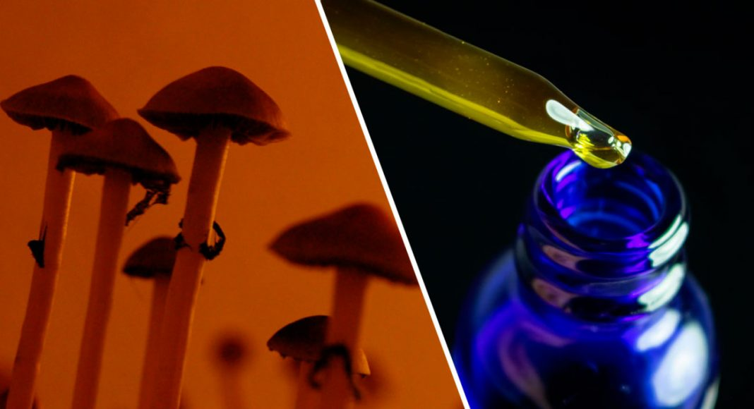 both cbd and psilocybin show potential in fighting alcohol use disorder
