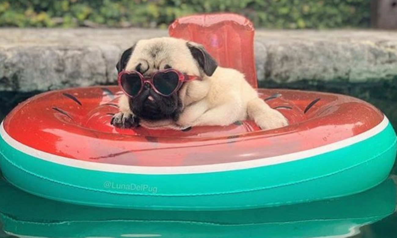 Stop What You Re Doing And Look At These 14 Dogs On Floaties The Fresh Toast