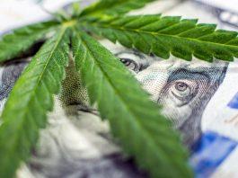 how the costco of cannabis will upend marijuana black market