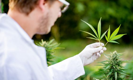 Why Is The DEA Flipping The Middle Finger At Marijuana Researchers?