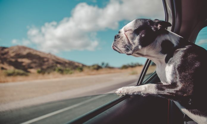 What CBD Oil Can Do For Pets