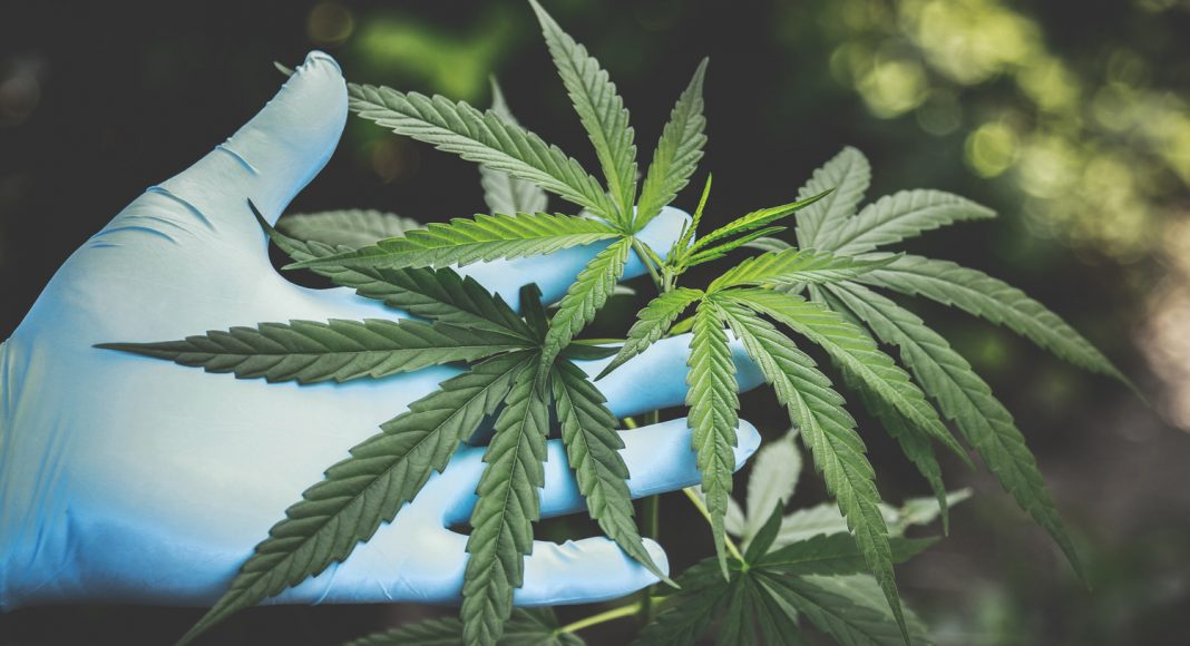 why if youre investing in marijuana you need to be careful