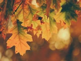 https://un3 things to know about fall allergies and marijuana