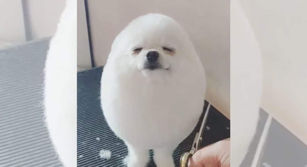 cute animal column