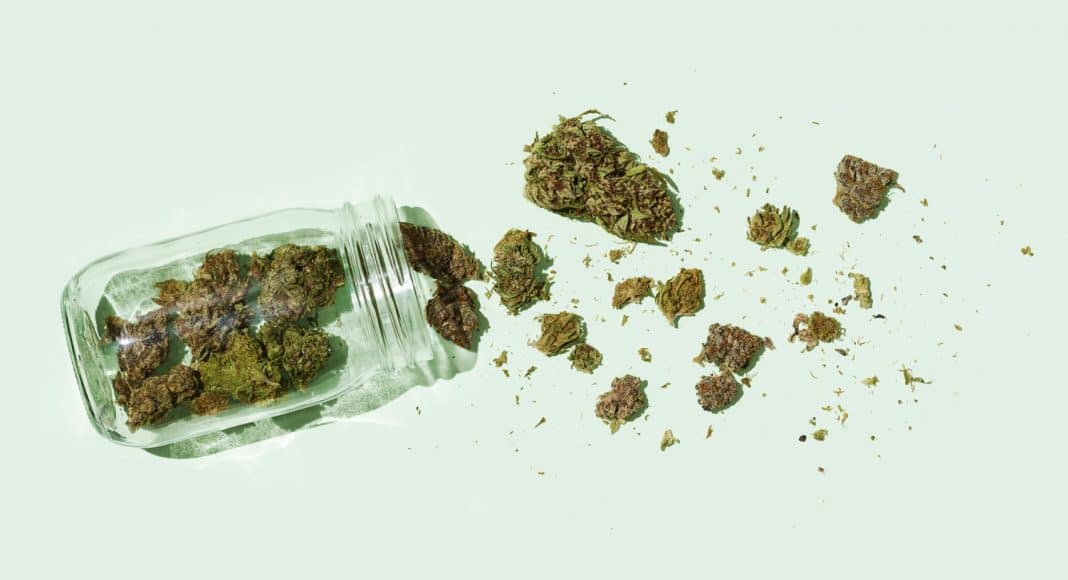 6 ways to tell if youre a dedicated marijuana user