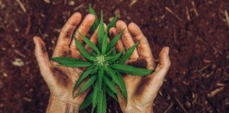USDA Releases Hemp Rules