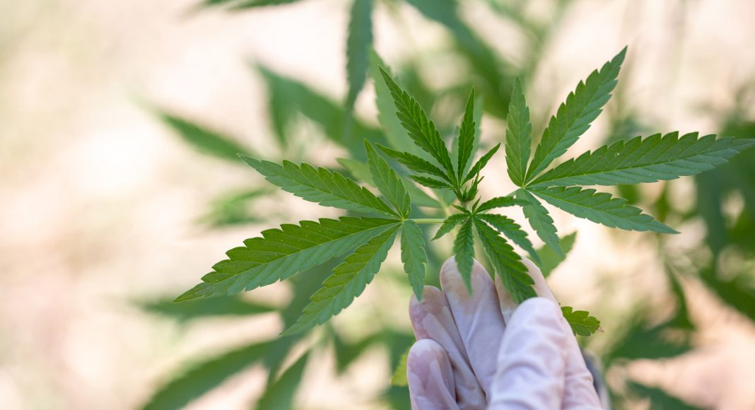 How CBD Blocks The Paranoia And Anxiety From Marijuana's THC