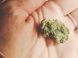 Lower Doses Of Marijuana Might Be Effective For Improving Libido