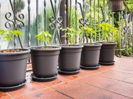Outdoor Grown Vs. Indoor Grown Cannabis