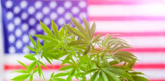 The United States of Cannabis Reveals Each State's Distinct Cannabis Identity