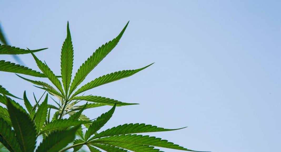 What Impact Does Marijuana Have On the Ozone
