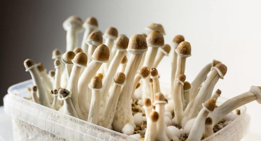Are Magic Mushrooms The Next Frontier For The Cannabis Industry?