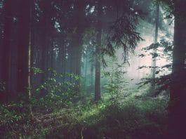 Black Market Marijuana Is Poisoning Public Forests