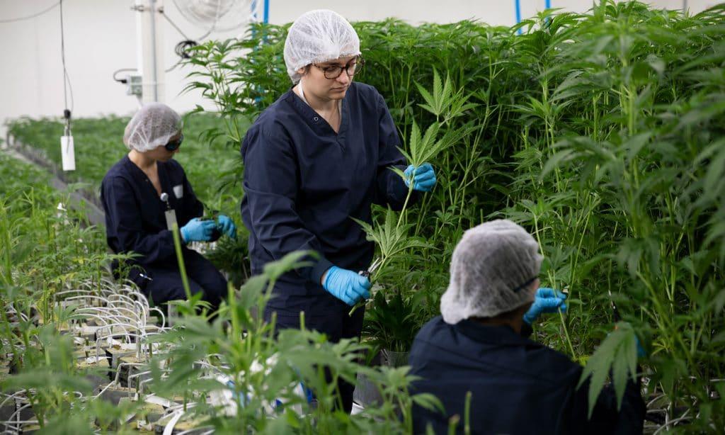 How To Succeed At Marijuana Job Fairs