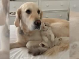 5 Animal Videos To Save Your Week- December 2