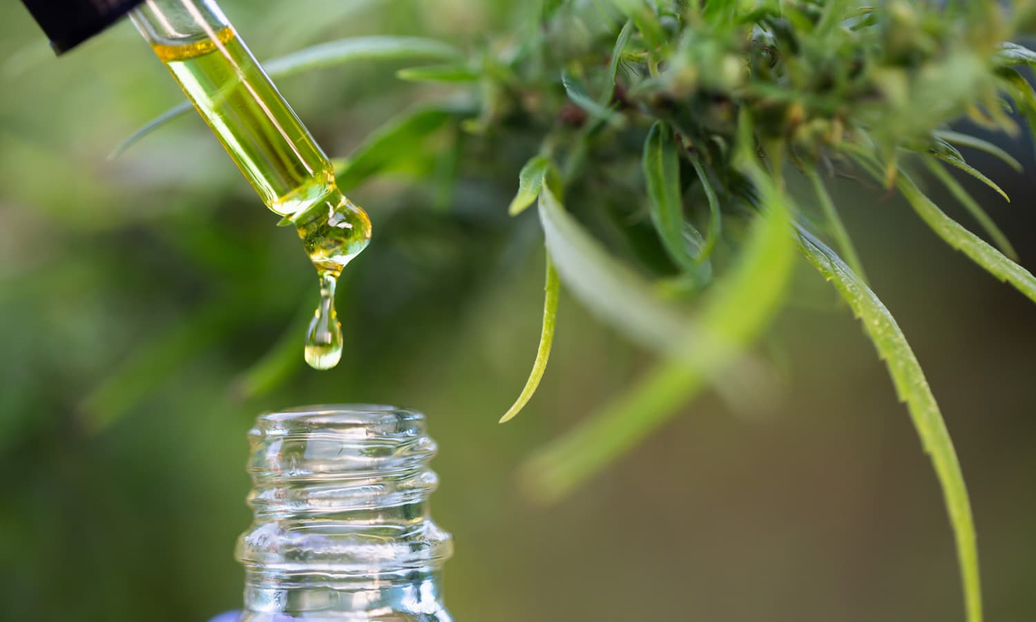 Can Taking CBD Make It Easier To Digest Political News?
