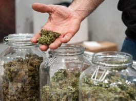 Why you didn't get the cannabis strain you think you did