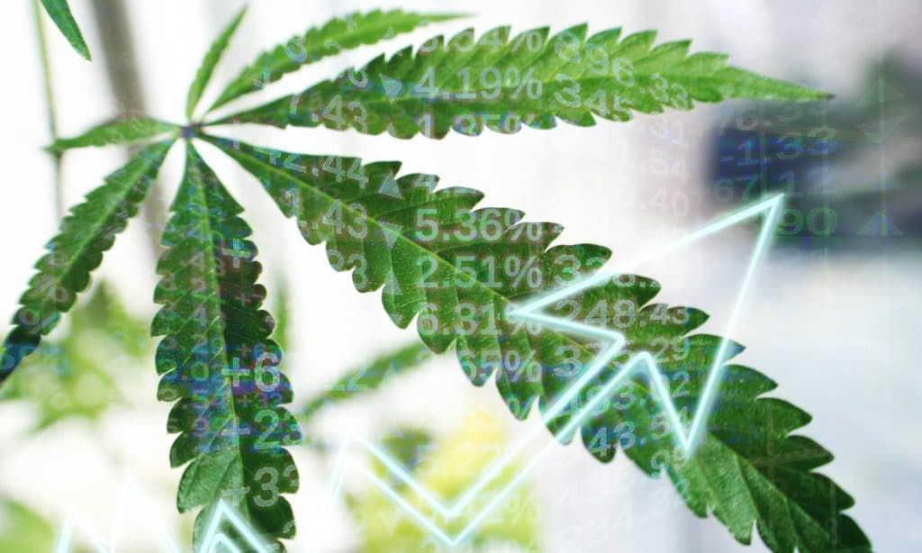 Are Americans Ready To Invest In Marijuana Stocks?