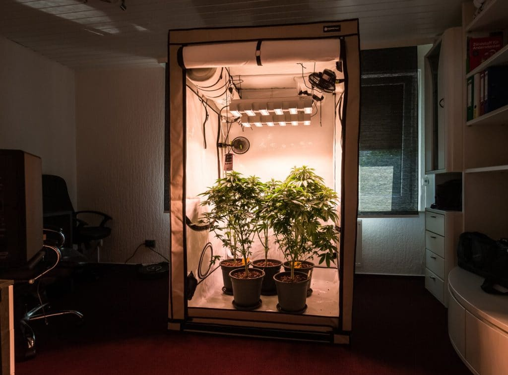 Now Is The Perfect Time To Check Out These Easy Marijuana Grow Kits