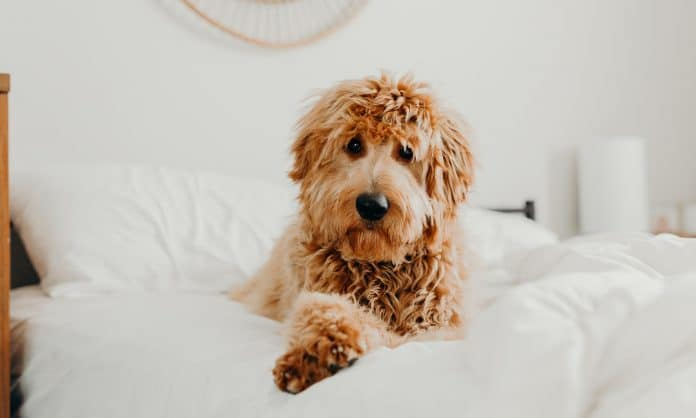 5 Things to Know About Hemp-CBD In Pet Products