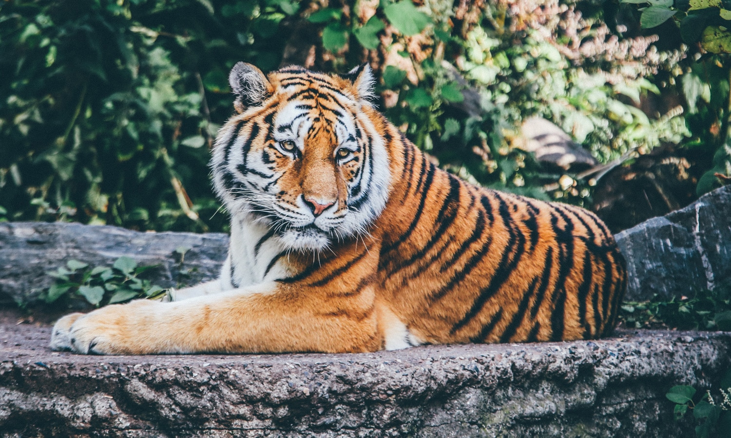 Tiger King and Marijuana Are Linked In More Ways Than One