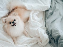 How CBD Can Help Dogs With Mobility Problems and Osteoarthritis