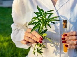 FDA Guidance On Cannabis Research- A Glimpse Of What's To Come For CBD Products?