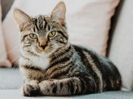 What Are The Effects Of CBD Oil On Cats?