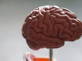 CBD And Blood Flow: What The Brain Wants You To Know